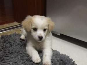 两个月的小狗可以洗澡吗